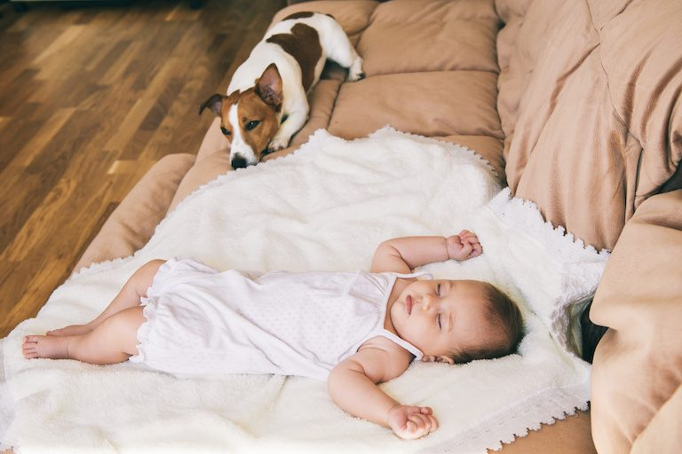 Jack russel terrier dog and cute 3 month baby sleeping together on the bed.